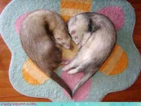I Heart Ferrets