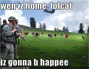 wen iz home, lolcat  iz gonna b happee