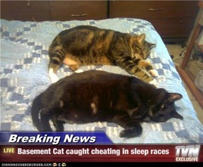 Breaking News - Basement Cat caught cheating in sleep races