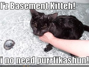 I'z Basement Kitteh!  i no need purrfikashun!