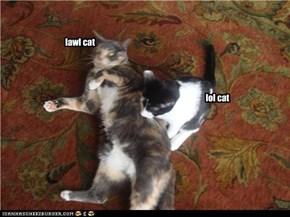lawl cat