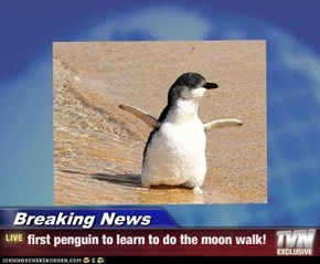 Breaking News - first penguin to learn to do the moon walk!