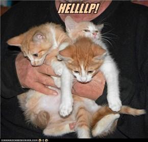 HELLLLP!