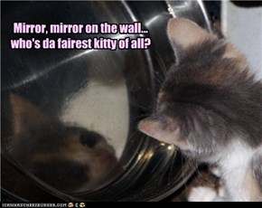 Mirror, mirror on the wall... who's da fairest kitty of all?