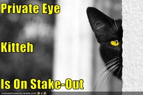 Private Eye Kitteh Is On Stake-Out