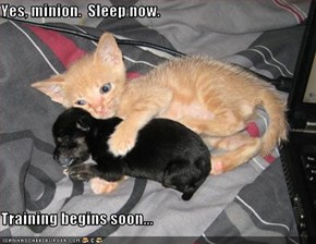 Yes, minion.  Sleep now.  Training begins soon...