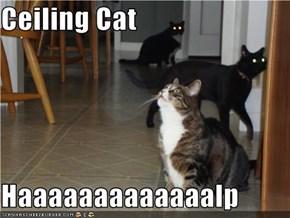 Ceiling Cat  Haaaaaaaaaaaaalp
