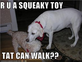 R U A SQUEAKY TOY    TAT CAN WALK??