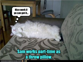 Sam works part-time as a throw pillow.