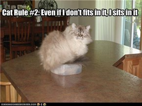 Cat Rule #2: Even if I don't fits in it, I sits in it