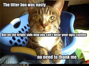 The litter box was nasty