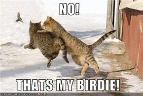 NO!  THATS MY BIRDIE!