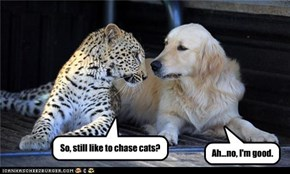 So, still like to chase cats?
