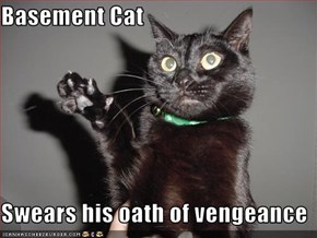 Basement Cat  Swears his oath of vengeance