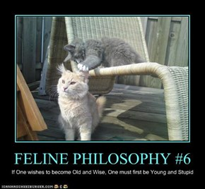 FELINE PHILOSOPHY #6