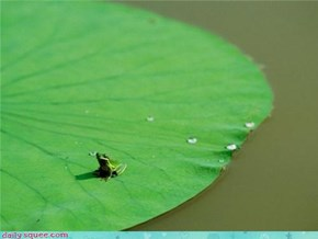 So Much Lily Pad, So Little Frog