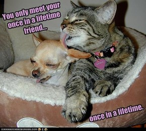 You only meet your  once in a lifetime  friend...