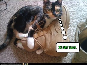 Cat really likes the boot.