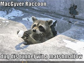 MacGyver Raccoon  dug dis tunnel wit a marshmallow