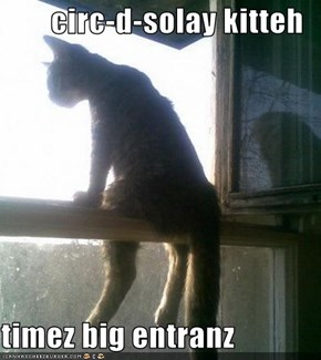 circ-d-solay kitteh  timez big entranz