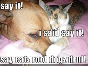 say it! i said say it! say catz rool dogz drul!