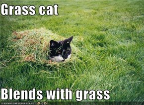 Grass cat  Blends with grass