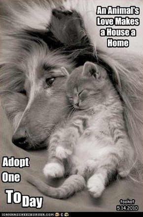 An Animal's Love Makes a House a Home