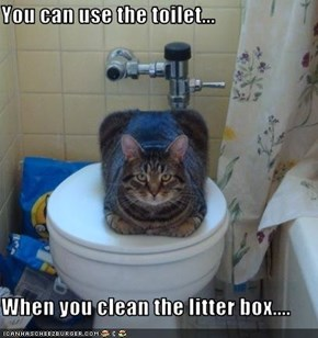 You can use the toilet...  When you clean the litter box....
