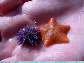 Tiny Sea Squeetures