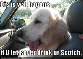 Dis is wat hapens  if U let Rover drink ur Scotch.