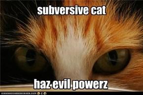 subversive cat
