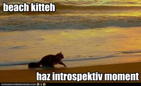beach kitteh