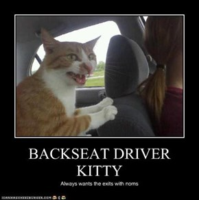 BACKSEAT DRIVER KITTY