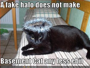 A fake halo does not make  Basement Cat any less ebil
