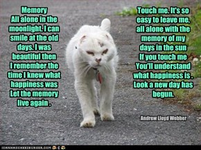 Adopt an older cat...