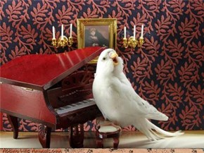 Libirdace Welcomes You to His Parlor