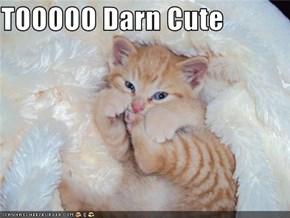 TOOOOO Darn Cute