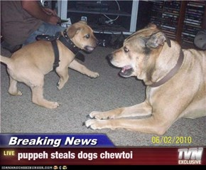Breaking News - puppeh steals dogs chewtoi