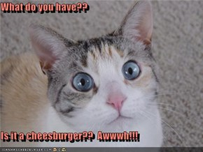 What do you have??  Is it a cheesburger??  Awwwh!!!