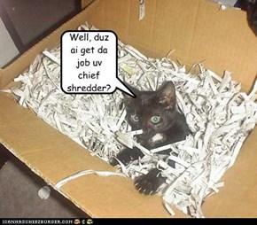 Well, duz ai get da job uv chief  shredder?