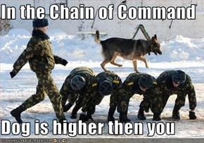 In the Chain of Command  Dog is higher then you