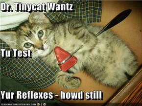 Dr. Tinycat Wantz Tu Test Yur Reflexes - howd still