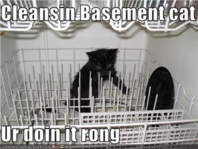 Cleansin Basement cat  Ur doin it rong