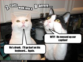 Cats don't let hoomens drink and caption