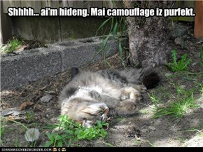 Incredible Invisible Kitteh