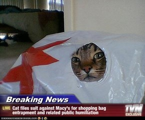 Breaking News - Cat files suit against Macy's for shopping bag entrapment and related public humiliation