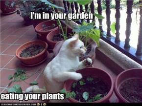 I'm in your garden