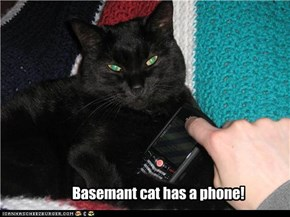 Basemant cat has a phone!