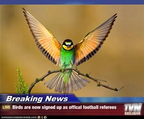Breaking News - Birds are now signed up as offical football referees