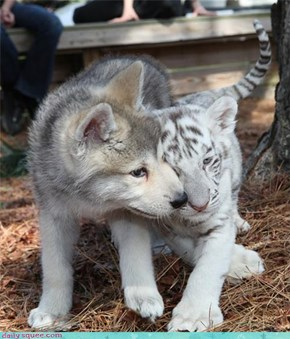 Buddies in Cute